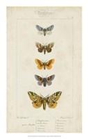 Pauquet Butterflies IV Framed Print