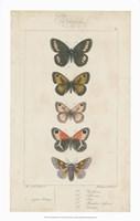 Pauquet Butterflies VI Framed Print