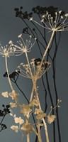 Twilight Botanicals I Fine Art Print