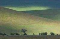 Panoramic view of hill, Ngorongoro Crater, Arusha Region, Tanzania Fine Art Print