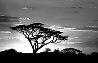 Silhouette of Trees in Black and White, Ngorongoro Conservation Area, Arusha Region, Tanzania Fine Art Print
