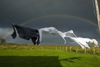 Rainbow, Stormy Sky and Clothes Line, Bunmahon, County Waterford, Ireland Fine Art Print