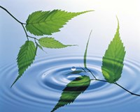 Two branches with green leaves floating above blue water ripples Fine Art Print