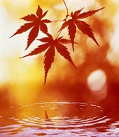 Selective focus of red leaves above water ripples Fine Art Print