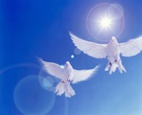 Two doves side by side with wings outstretched in flight with brilliant light and blue sky Fine Art Print