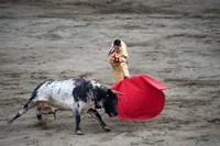 Matador and a bull in a bullring, Lima, Peru Fine Art Print