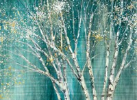 Blue Birch Fine Art Print