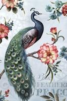 Blue Feathered Peacock I Fine Art Print