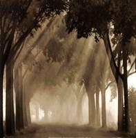 Misty Grove Fine Art Print