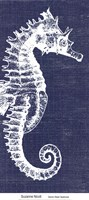 Denim Washed Seahorse Fine Art Print