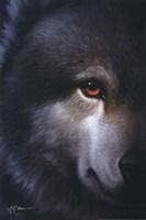 Endangered Wolf Fine Art Print
