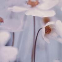 Spring Beauty I Blue Fine Art Print