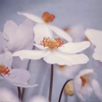 Spring Beauty II Blue Fine Art Print