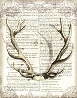 Regal Antlers on Newsprint I Fine Art Print
