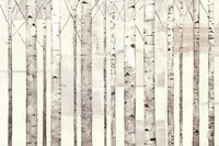 Birch Trees on White Framed Print