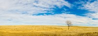Lone Hackberry tree in autumn plains, South Dakota Fine Art Print
