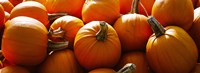 Pumpkins, Half Moon Bay, California, USA Fine Art Print