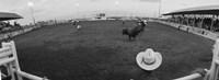Cowboy riding bull at rodeo arena, Pecos, Texas, USA Fine Art Print