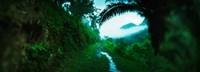 Trail through a rainforest, Cayo District, Belize Fine Art Print