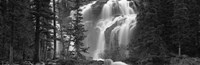 Waterfall in a forest, Banff, Alberta, Canada (black and white) Fine Art Print