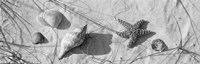 Close-up of a starfish and seashells on the beach, Dauphin Island, Alabama, USA Fine Art Print
