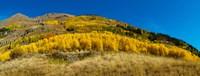 Aspen trees on mountain, Alpine Loop Scenic Backway, San Juan National Forest, Colorado, USA Fine Art Print