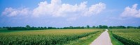 Road along corn fields, Jo Daviess County, Illinois, USA Fine Art Print
