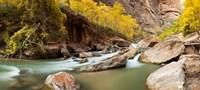 Cottonwood trees and rocks along Virgin River, Zion National Park, Springdale, Utah, USA Fine Art Print