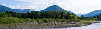 Quinault Rainforest, Olympic National Park, Olympic Peninsula, Washington State Fine Art Print
