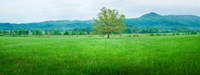 Agricultural field with mountains in the background, Cades Cove, Great Smoky Mountains National Park, Tennessee, USA Fine Art Print