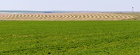 Harvested alfalfa field patterns, Oklahoma, USA Fine Art Print
