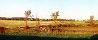 Amish farmer plowing a field, USA Fine Art Print