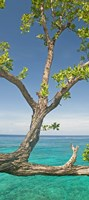 Tree overhanging sea at Xtabi Hotel, Negril, Westmoreland, Jamaica Fine Art Print