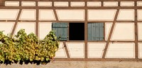 Detail of half timber house and grape vines, Strumpfelbach, Baden-Wurttemberg, Germany Fine Art Print
