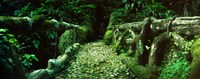 Wooden bridge in the subtropical forest, Parque Lage, Jardim Botanico, Corcovado, Rio de Janeiro, Brazil Fine Art Print