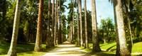 Trees both sides of a garden path, Jardim Botanico, Zona Sul, Rio de Janeiro, Brazil Fine Art Print