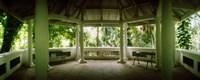 Canopy in the botanical garden, Jardim Botanico, Zona Sul, Rio de Janeiro, Brazil Fine Art Print