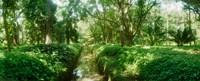 Trees in a botanical garden, Jardim Botanico, Zona Sul, Rio de Janeiro, Brazil Fine Art Print
