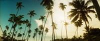Palm trees along the beach in Morro De Sao Paulo, Tinhare, Cairu, Bahia, Brazil Fine Art Print