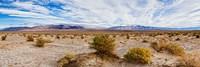 Bushes in a desert, Death Valley, Death Valley National Park, California, USA Fine Art Print