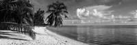 Palm trees on the beach, Matira Beach, Bora Bora, French Polynesia Fine Art Print