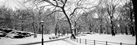 Central Park in Snow Fine Art Print