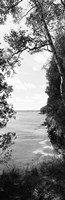 Trees at the lakeside in black and white, Lake Michigan, Wisconsin Fine Art Print