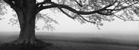 Tree in a farm, Knox Farm State Park, East Aurora, New York State, USA Fine Art Print