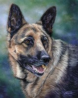 German Shepard Fine Art Print