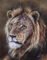 Black-Maned Lion Fine Art Print