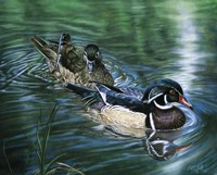 Wood Ducks Fine Art Print