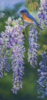 Bluebird In Wisteria Fine Art Print