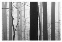 Forest Code Fine Art Print