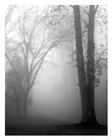 November Fog Fine Art Print